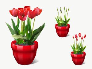 tulip_large.jpg