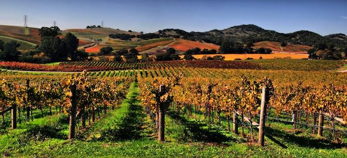 Napa-Valley-California_